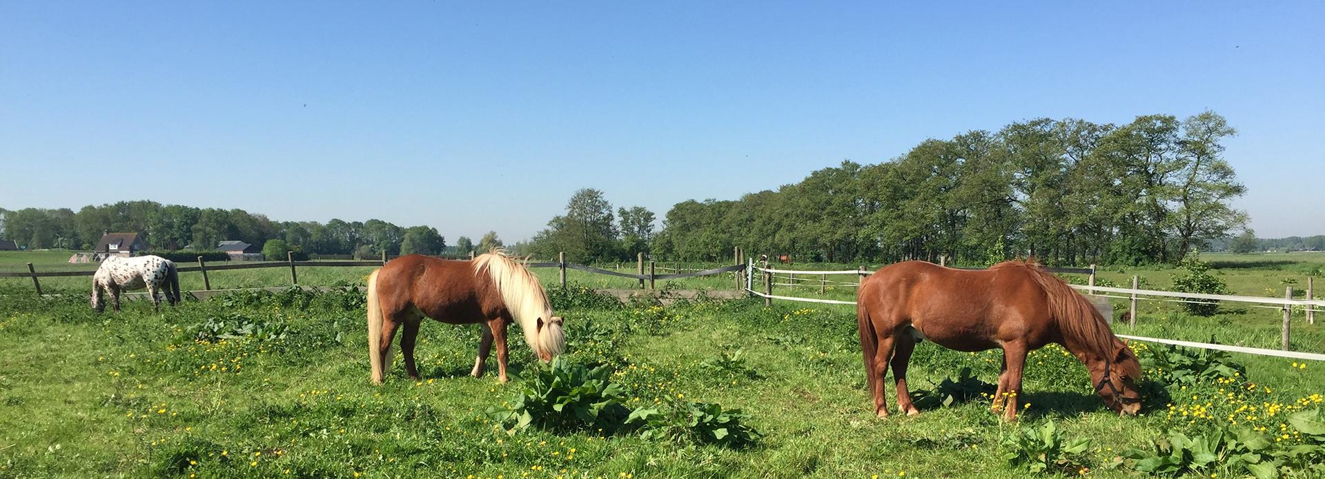 LEF paardencoaching en begeleiding